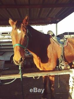 16 Inch Stonewall Endurance/ Trail Saddle